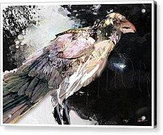 Raven 10 Acrylic Print by James VerDoorn