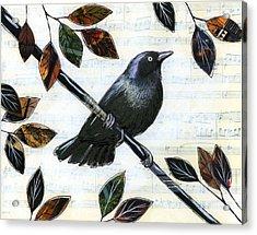 Raven Melody Acrylic Print by Amy Giacomelli
