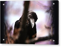 Raven Outside My Window Acrylic Print