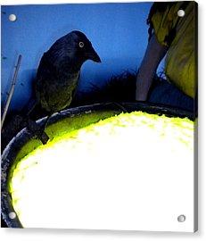 Raven Reflecting  Acrylic Print by Colette V Hera  Guggenheim