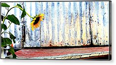 Ray Of Hope Acrylic Print
