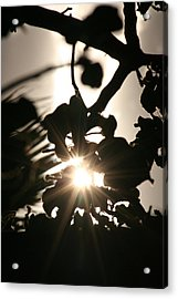 Rays Among The Leaves Acrylic Print by Louise Mingua