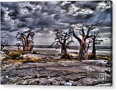 Rays On The Baobabs Acrylic Print