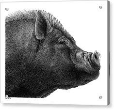 Razorback Acrylic Print