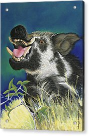 Razorback Acrylic Print by Tracy L Teeter