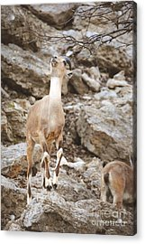Reach Acrylic Print by DiDi Higginbotham