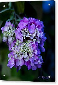 Acrylic Print featuring the photograph Reaching Into Purple by Cheri Randolph