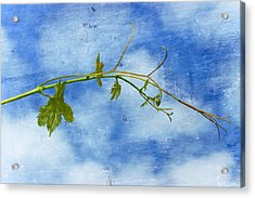 Reaching Out Acrylic Print by Heidi Smith