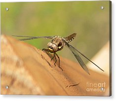Read For Take Off Acrylic Print by Nancie DeMellia