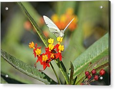 Acrylic Print featuring the photograph Ready For Flight by Jerry Cahill