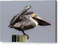 Ready For Take Off Acrylic Print by Paulette Thomas