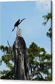 Ready For Take-off Acrylic Print by Rdr Creative