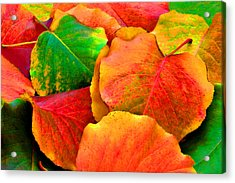Really Colorful Fall Leaves Acrylic Print