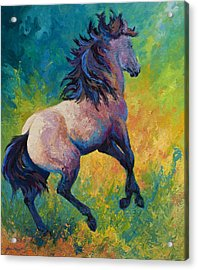 Rearing To Go Acrylic Print by Marion Rose