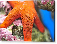 Acrylic Print featuring the photograph Red   Sea Star by Puzzles Shum