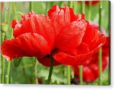 Acrylic Print featuring the photograph Red And Green by Fotosas Photography