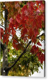 Acrylic Print featuring the photograph Red And Green Prior X-mas by Michael Frank Jr