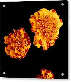 Red And Yellow Acrylic Print by Barry Shaffer