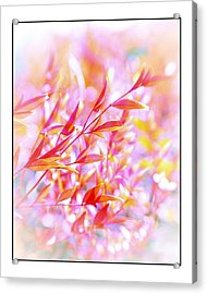 Red And Yellow Leaves Acrylic Print by Judi Bagwell