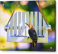 Red-belly Comes For Lunch Acrylic Print by Bill Tiepelman
