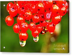 Red Berries And Raindrops Acrylic Print by Thomas R Fletcher