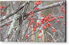 Red Berry Branch Acrylic Print