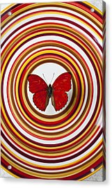Red Butterfly On Plate With Many Circles Acrylic Print by Garry Gay