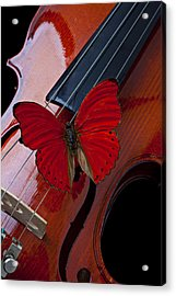 Red Butterfly On Violin Acrylic Print by Garry Gay