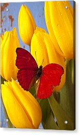 Red Butterful On Yellow Tulips Acrylic Print by Garry Gay