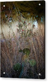 Red Button Cactus And Friends   1860 Acrylic Print by Fritz Ozuna