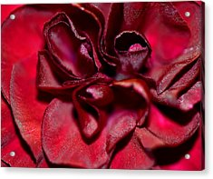 Red Carnation With Heart Acrylic Print by Sandi OReilly