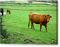 Acrylic Print featuring the photograph Red Cow by Charlie and Norma Brock