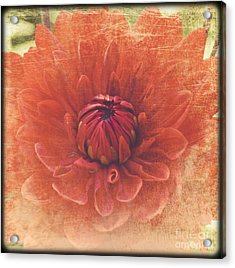 Acrylic Print featuring the photograph Red Dahlia by Alana Ranney