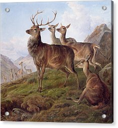 Red Deer In A Highland Landscape Acrylic Print by Charles Jones