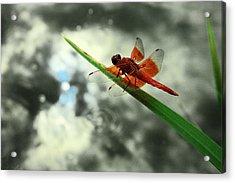 Red Dragonfly Acrylic Print by Viktor Savchenko