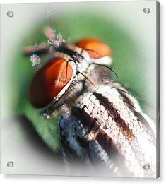 Red-eye Flight Acrylic Print by Maureen  McDonald