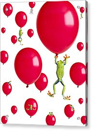 Red-eyed Treefrogs Floating On Red Acrylic Print by Corey Hochachka