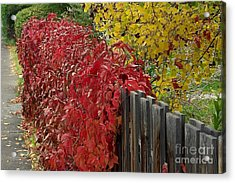 Red Fence Acrylic Print