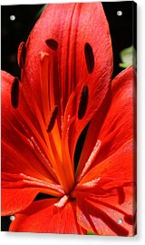 Red Flame Acrylic Print by Bruce Bley