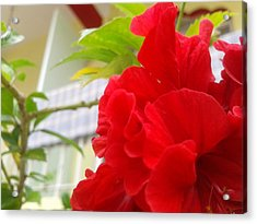Red Flower Acrylic Print by Chetan Ranjan