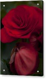 Red Flower Acrylic Print by Kelvin Andow