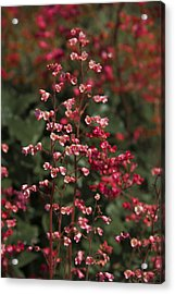 Red Flowers Acrylic Print by Svetlana Sewell