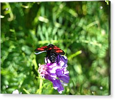 Red Fly Acrylic Print by Andonis Katanos