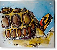 Red Foot Tortoise Acrylic Print by Richard Greene