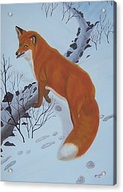 Red Fox In Snow Acrylic Print by Melinda Fox