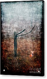 Acrylic Print featuring the photograph Red Fox Under Tree by Dan Friend