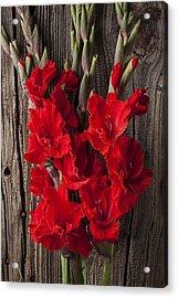 Red Gladiolus Acrylic Print by Garry Gay