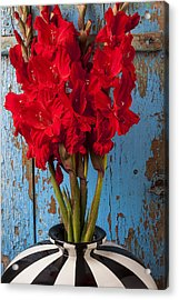 Red Glads Against Blue Wall Acrylic Print by Garry Gay