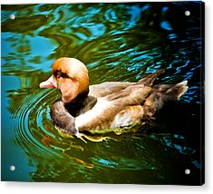 Red Head Duck Acrylic Print by Mickey Clausen