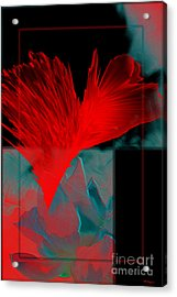 Red Heart Flower Acrylic Print by Christine Mayfield